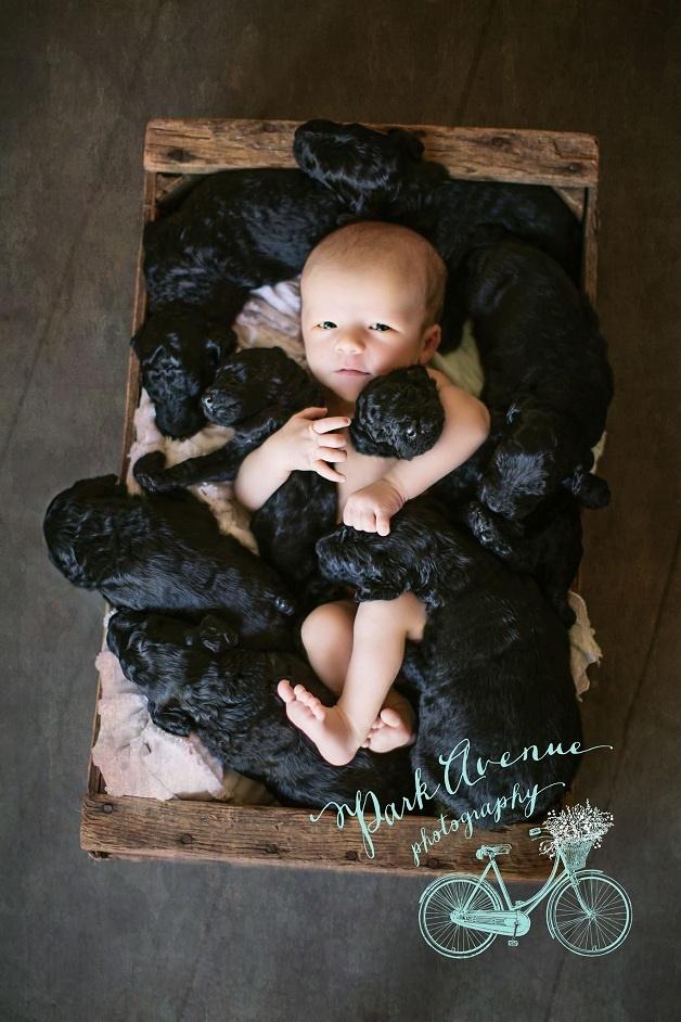 ensaio-cachorro-filho-4