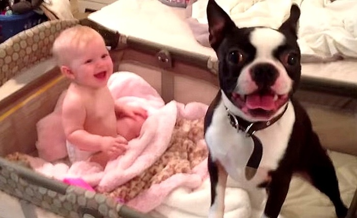 Mãe pede para cachorro sair do berço e ele desobedece de forma fantástica