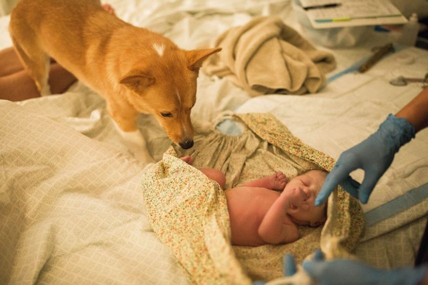 Cachorro fica ao lado de dona durante o parto